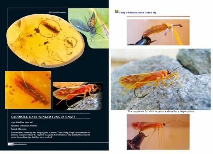 Til venstre en side fra første opplag av Harun Yahyas «Atlas of Creation». Forfatteren «beviser» at fossiler ser ut akkurat som nålevende insekter, avbildet på den svarte siden nederst til høyre. Men på bildet av insektet ser man en krok under magen. Det er fordi bildet stammer fra en hjemmeside for fiskeredskaper. Det originale bildet kan man se til høyre. Bildet er fjernet i senere utgaver.  (Foto: (Illustrasjon: Peter Kjærgaard))