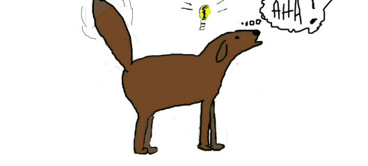 Hundetrening – en intro