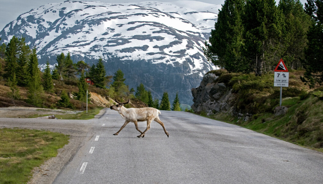 Store deler av arealet i fjellet vårt er nå vernet. Men miljøhensyn og behovet for utvikling av fjellkommunene skaper motsetninger. I Norge har vi ikke noe godt system for å takle disse motsetningene, mener forskere. (Foto: C.H., Visitnorway)