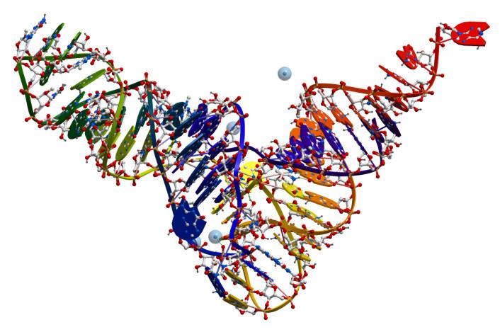 RNA brukes i forskjellige former til forskjellige formål. Blant annet blir DNA oversatt til mRNA (messenger RNA), som igjen blir oversatt til proteiner. RNA blir brukt når ribosomene setter sammen aminosyrer til proteiner. Små RNA-stumper brukes til å gjenkjenne de enkelte aminosyrene. Dette kalles tRNA (bildet). Dessuten brukes RNA som strukturmolekyler i blant annet ribosomer.  (Foto: Colourbox)