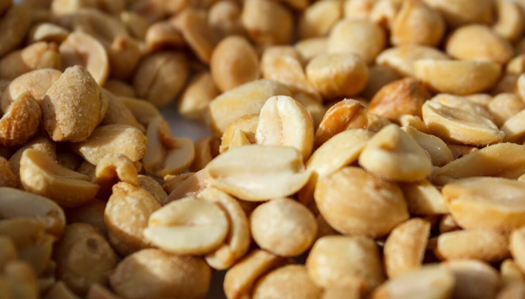 Peanøtter kan være farlig for allergikere, men det er mulig å trene opp toleransen. (Foto: Colourbox)