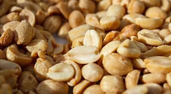 Gi småbarn peanøtter for å unngå allergi