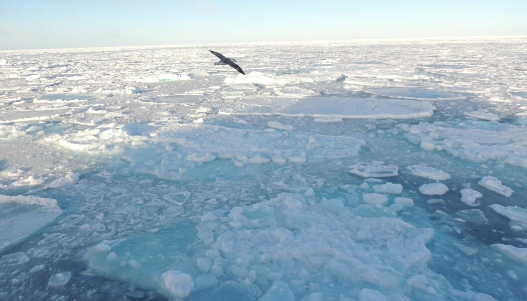 Tidevannet fra Atlanterhavet spiller en viktig rolle for issmeltingen i Arktis.  (Foto: Microstock)