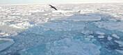 Tidevannet avgjør om isen smelter i Arktis