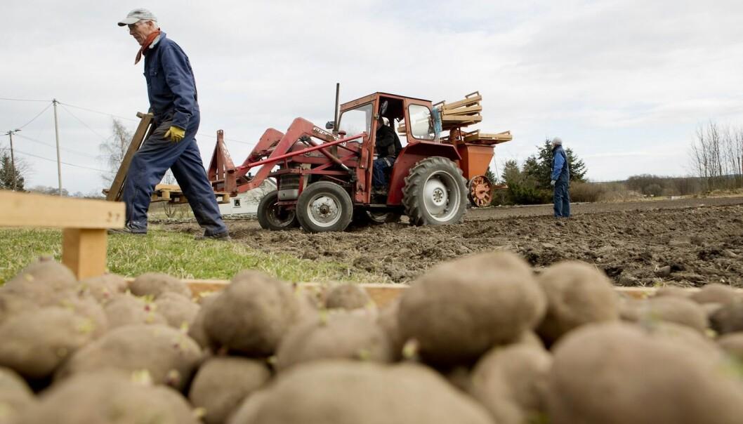 I Noreg er bonden, vegleiaren, industrien og forskarane opne om kor potetål-smitta finnast. I andre land vil dei ikkje diskutere med kvarandre, og det eksisterer ikkje kart som viser tydeleg kva som er smitta. (Foto: Tore Meek, Scanpix)