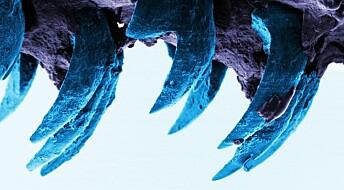 Dette er verdens sterkeste naturlige materiale