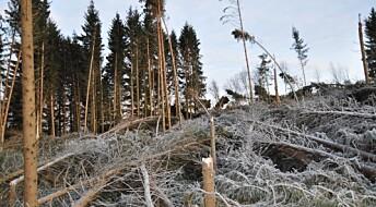 Skogbruket kan styrke klimaberedskapen