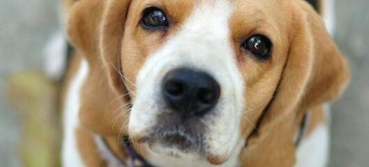 Hunden – en ekspert på mennesket