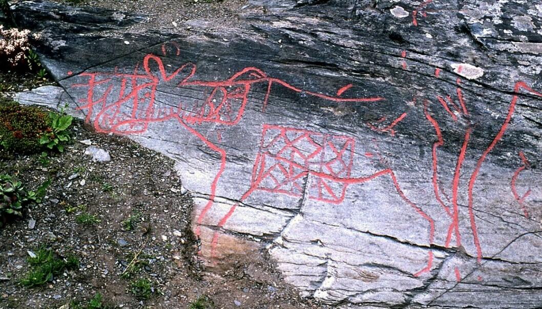 På Berg-feltet i Verdal er det hogd inn figurer i berget gjennom flere epoker, på samme vis som på det mer kjente Bardal-feltet. De eldste ristningene framstiller naturtro elger.  (Foto: Fredrik Gaustad / NTNU Vitenskapsmuseet)