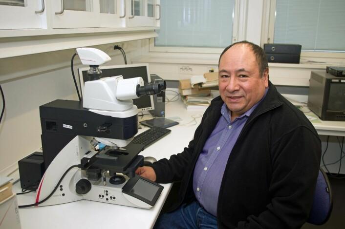 Ricardo Holgado har brukt mikroskopet for å kartleggje potetcystenematodar. (Foto: Georg Mathisen)