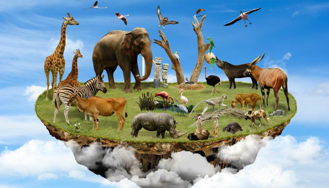 Dyr trenger plass for å overleve som art. Verdenssamfunnet har avsatt områder for å sikre det biologiske mangfoldet, men ikke nok. (Collage: Colourbox)
