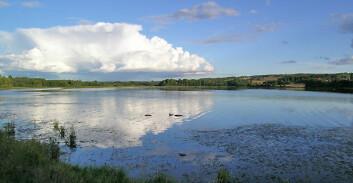Åkersvika naturreservat er et naturreservat i Åkersvika mellom Hamar og Stange kommuner, Hedmark. (Foto: Wikimedia Commons. Bildet er offentlig eiendom)