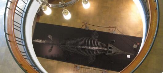 Rare knokler, nydelige fiskeøgler og et stengt museum