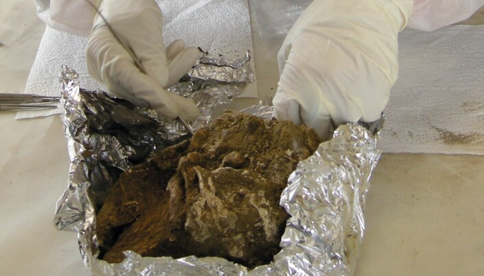 DNA-rester kan varsle ny svartedaud