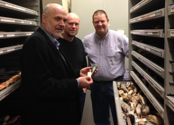 Jan T. Lifjeld, Arild Johnsen og Lars Erik Johannessen i NHM si samling av fugleskinn. No kan kven som helst få oversikt over kva som finst her. (Foto: Torstein Helleve, NHM)