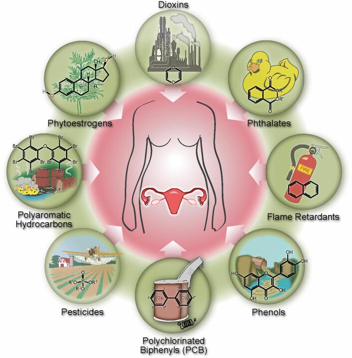 """15 av stoffene som ble undersøkt viste seg å henge sammen med tidlig overgangsalder: Ni PCB-stoffer, som brytes langsomt ned i naturen og finnes i luft, vann og sedimenter. Tre pesticider, som er vanlige i plantevernmidler. To ftalater, som kan finnes i blant annet plast, sminke og såpe. Og ett furan, typisk i noen matvarer. (Foto: (Illustrasjon: fra artikkelen """"Persistent Organic Pollutants and Early Menopause in U.S. Women""""))"""
