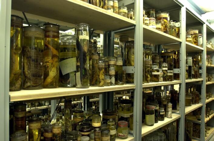 Noen av de 22 millioner dyreartene i spritsamlingen på Darwinsenteret. (Foto: The Trustees of the Natural History Museum, London)