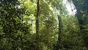 Kommentar: Hvorfor er det så mange arter i tropene?