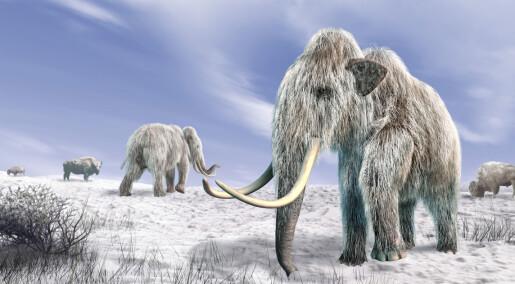Hvorfor døde mammutene ut?