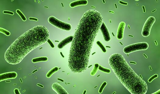 Våre venner bakteriene
