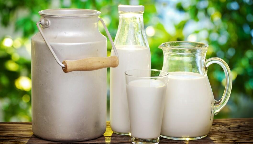 Det har lenge vært antatt at det er vitamin B2 (riboflavin) i melken som utløser prosessen som fører til solsmak. Det er slik at riboflavin kun starter slike reaksjoner når det utsettes for fiolett og blått lys. Gult og rødt lys skal ikke gi noen slik negativ effekt. Men ved matforskningsinstituttet Nofima har forskerne overraskende vist at orange og rødt lys faktisk gir mer solsmak i melk enn blått lys. (Foto: Microstock)