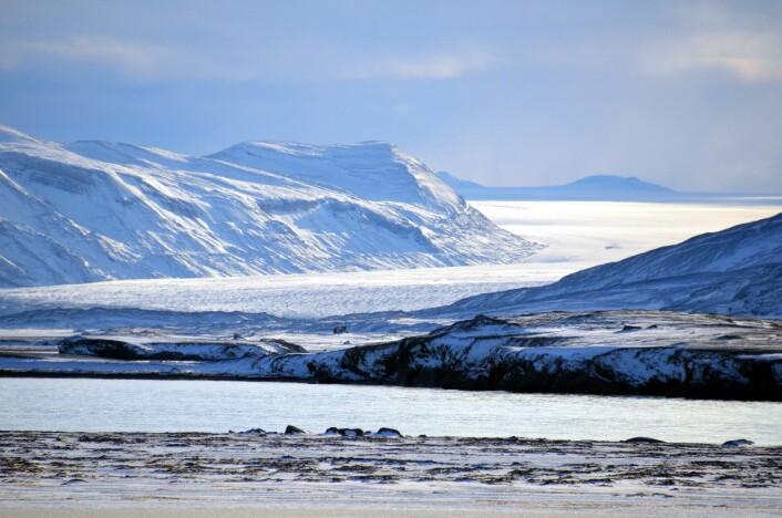 Nærheten til isbreene er noe av det som gjør Ny-Ålesund til et attraktiv forskningssamfunn.  (Foto: Helge M. Markusson, Framsenteret)