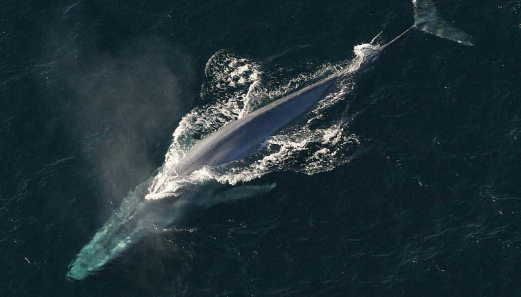 Hvor store er havets giganter?