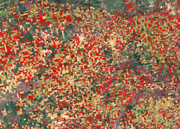 Åkre med ulike typer matplanter i Kansas sett av den amerikanske satellitten Landsat-5 i 2012.  (Foto: USGS/ESA)