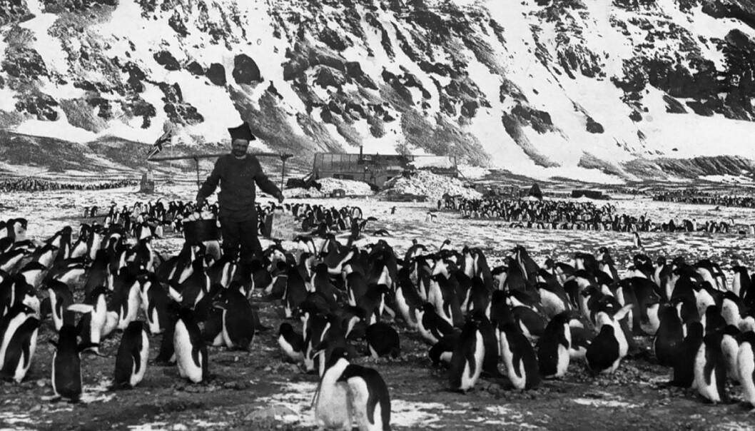 På bildet ser vi Per Savio bære vann til den engelske forskningsstasjonen på Kapp Adare i Antarktis. Han skulle senere bli den som satte sin fot lengst sør, en rekord han sammen med ekspedisjonslederen Carsten Borchgrevink fra Christiania og engelskmannen William Colbeck hadde frem til Scott og Shackleton slo rekorden i 1902. (Foto: Norsk Polarinstitutts bildearkiv)