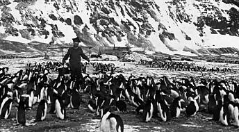 Samer og pingviner i Antarktis