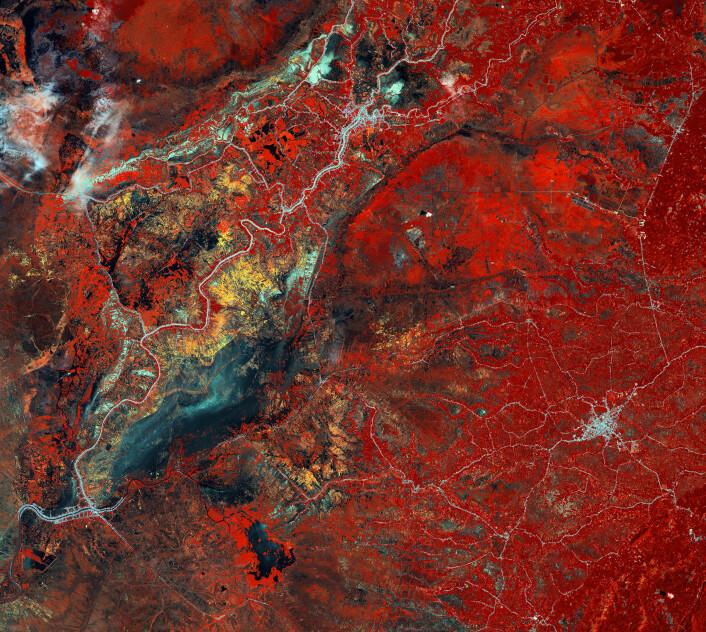Regnskog (rødt), veier (hvite striper) og jordbruk (gule felt) i det sørlige Kalimantan på Borneo sett av den japanske satellitten ALOS i 2010.  (Foto: JAXA/ESA)
