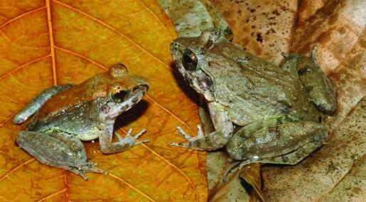 Frosk føder levende rumpetroll