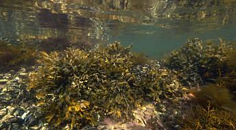 Kronikk: Havet er ett eneste stort, sammenhengende system