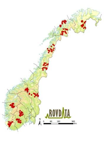 Områder med intensiv overvåking av kongeørn i Norge. Røde prikker illustrerer alle de ulike territoriene som ble overvåket i 2014. <em>Klikk på kartet for større versjon.</em> (Foto: (Kart: Rovdata))