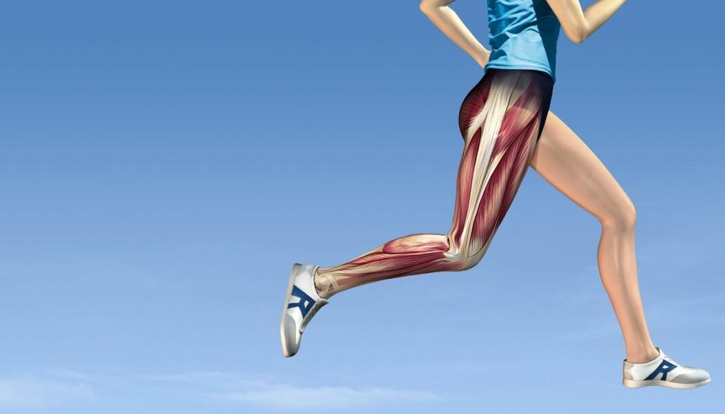 Trening har positiv effekt på funksjonene i muskelcellene. (Illustrasjon: Science Photo Library)