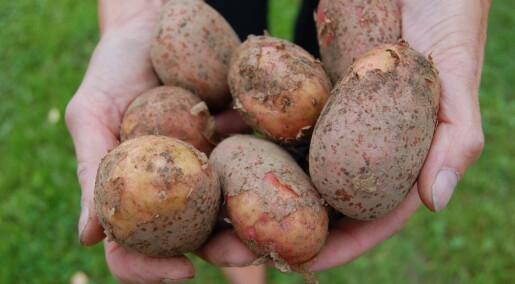 Stygge, norske poteter blir penere