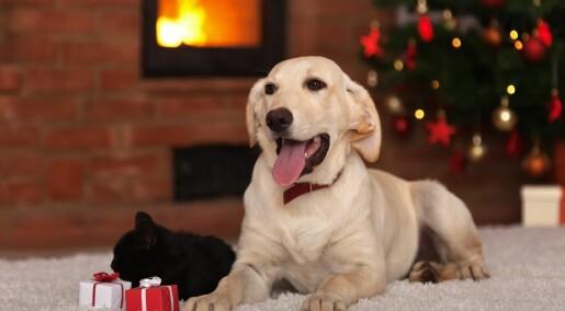 Slik får du hunden til å glede seg