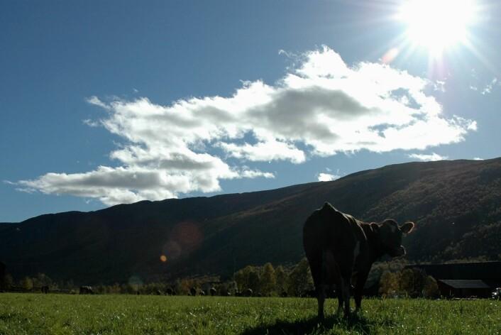 Biogass er løsningen for at Dagros skal få bedre balanse i eget klimaregnskap.  (Foto: Jon Schärer)