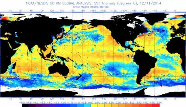 Temperatur-avvik i havoverflaten 11. desember, målt fra satellitt. (Bilde: NOAA)