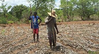 Afrikanske avlinger dobles med ny metode