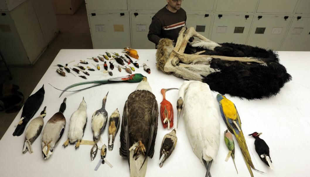 Noen av artene som har fått genomene sine kartlagt. Bildet er tatt ved National Museum of Natural History i Washington.  (Foto: AAAS/Carla Schaffer)
