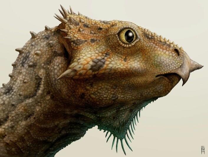 En kunsterisk framstilling av hodet til Aquilops americanus. (Foto: (Illustrasjon: Brian Engh/Raymond M. Alf Museum of Paleontology))
