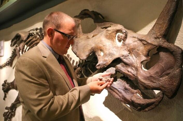 Skallen til Aquilops americanus blir liten ved siden av hodet til sin fjerne slektning Centrosaurus. Andrew Farke er en av forskerne som har gitt navn til den vesle dinosauren. (Foto: Scott Nichols, Raymond M. Alf Museum of Paleontology)