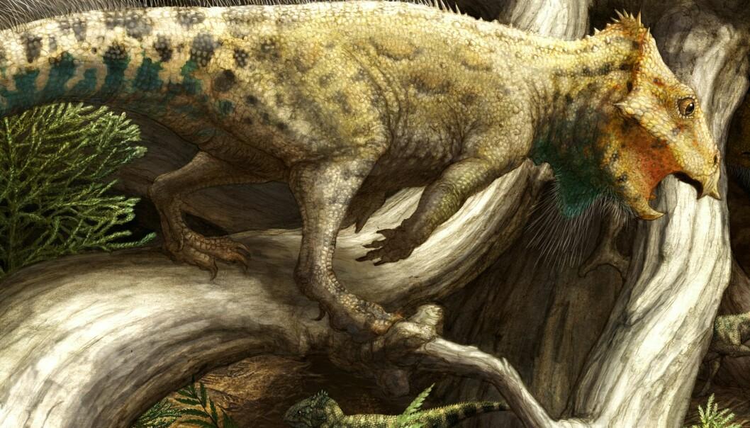 Slik kan dinosauren Aquilops americanus ha sett ut. (Illustrasjon: Brian Engh/Raymond M. Alf Museum of Paleontology)