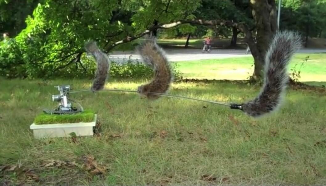 Roboten 'Danger, Squirrel Nutkin!' fra 2009 bruker datasyn til å skanne omgivelsene for rovdyr som jakter på ekorn. For eksempel hauker, rever og mennesker. Skulle en fare nærme seg, advarer roboten de ekornene som holder i nærheten, ved å «snakke» til dem på deres eget «språk» – nemlig spesielle haleslag.  (Foto: Skjermdump fra Vimeo)
