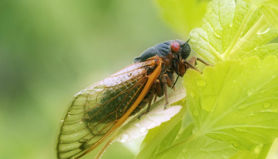 Innsikt om insekter