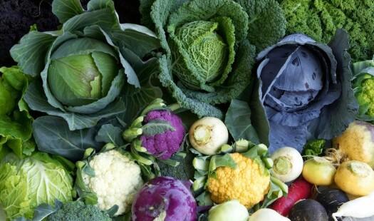Nå er det sesong for rotgrønnsaker