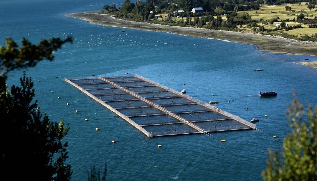 Giftig aluminium og kobber har skapt problemer for oppdrettsnæringen i Chile. Her fra et anlegg i nærheten av Puerto Montt, sør i landet. (Illustrasjonsfoto: NTB Scanpix)