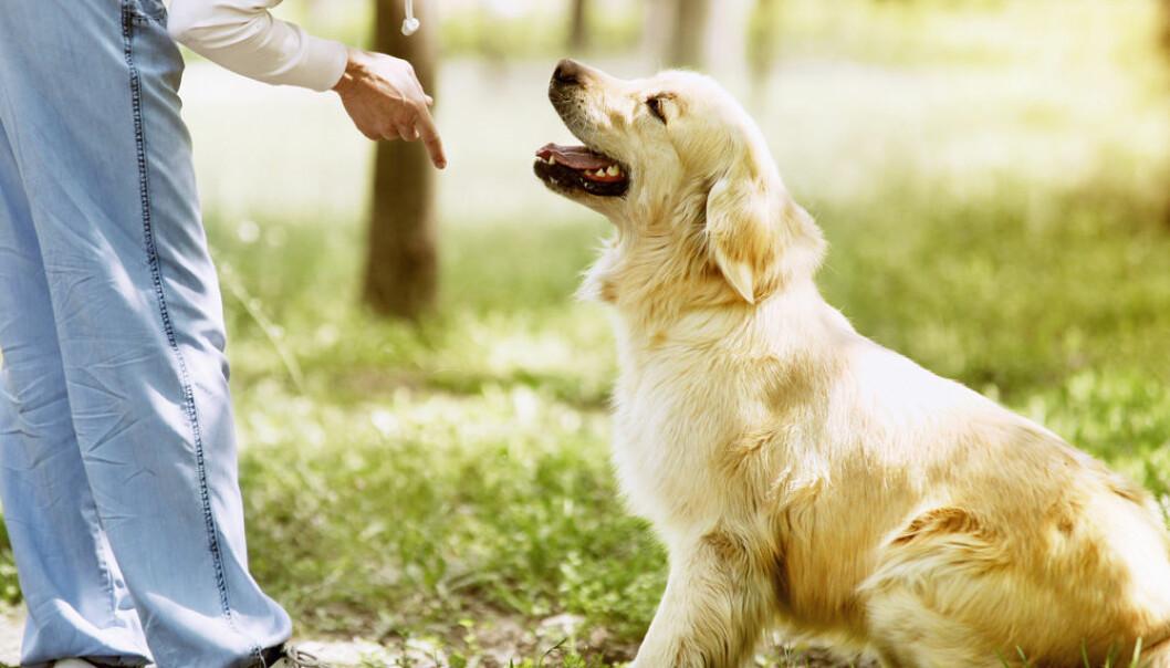 Forskning antyder at hundehjernen også får med seg følelsene i stemmen din.  (Foto: Microstock)