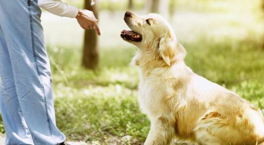 Hunden hører både ord og følelser i stemmen din